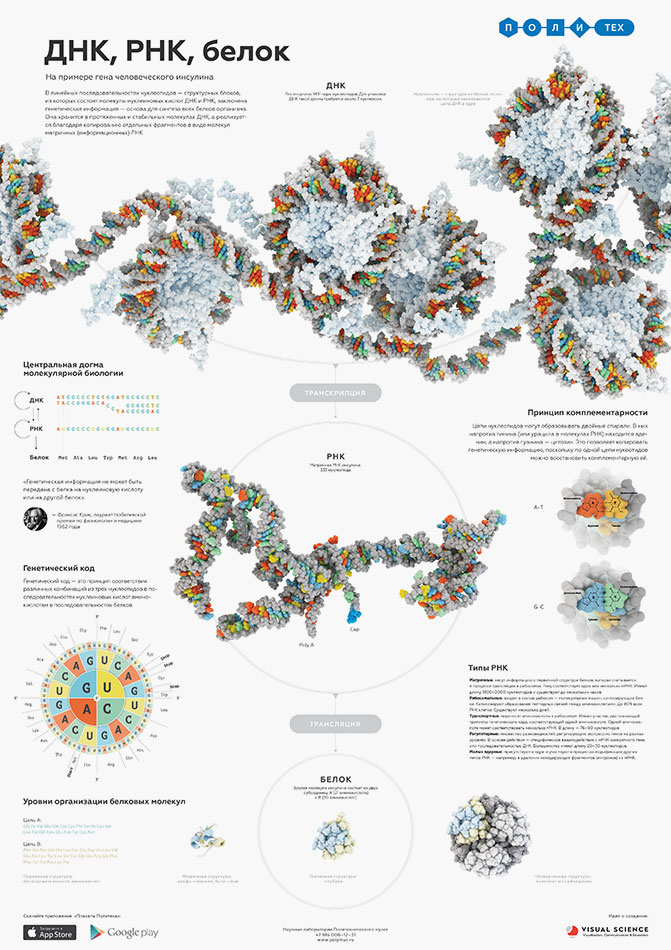 DNA, RNA and protein structure - educational poster